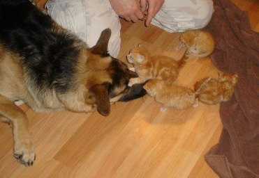 A dog and kittens