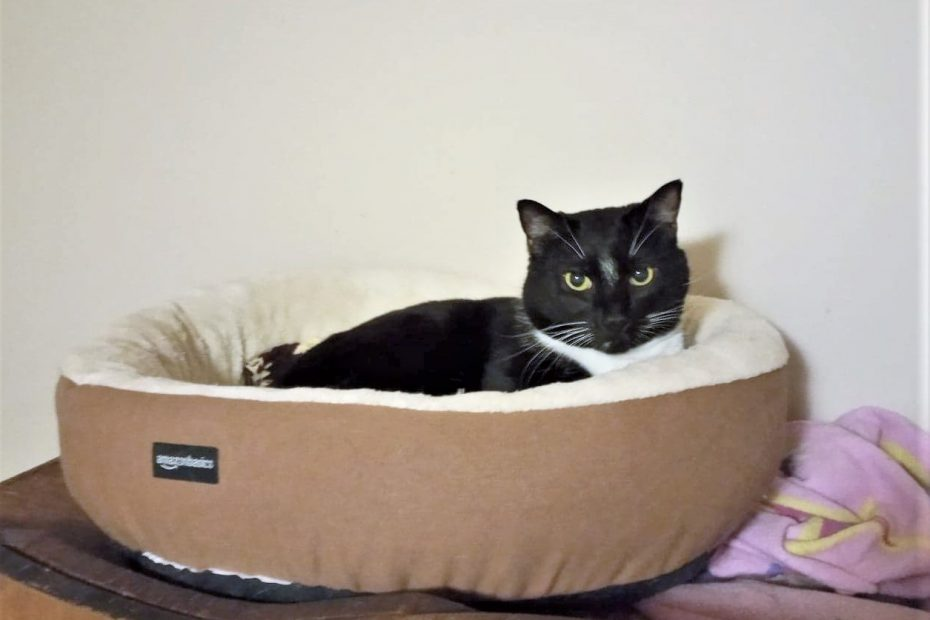 Black & White cat in a bed