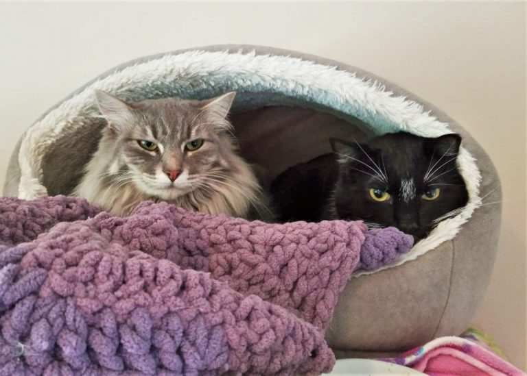 2 cats in a bed